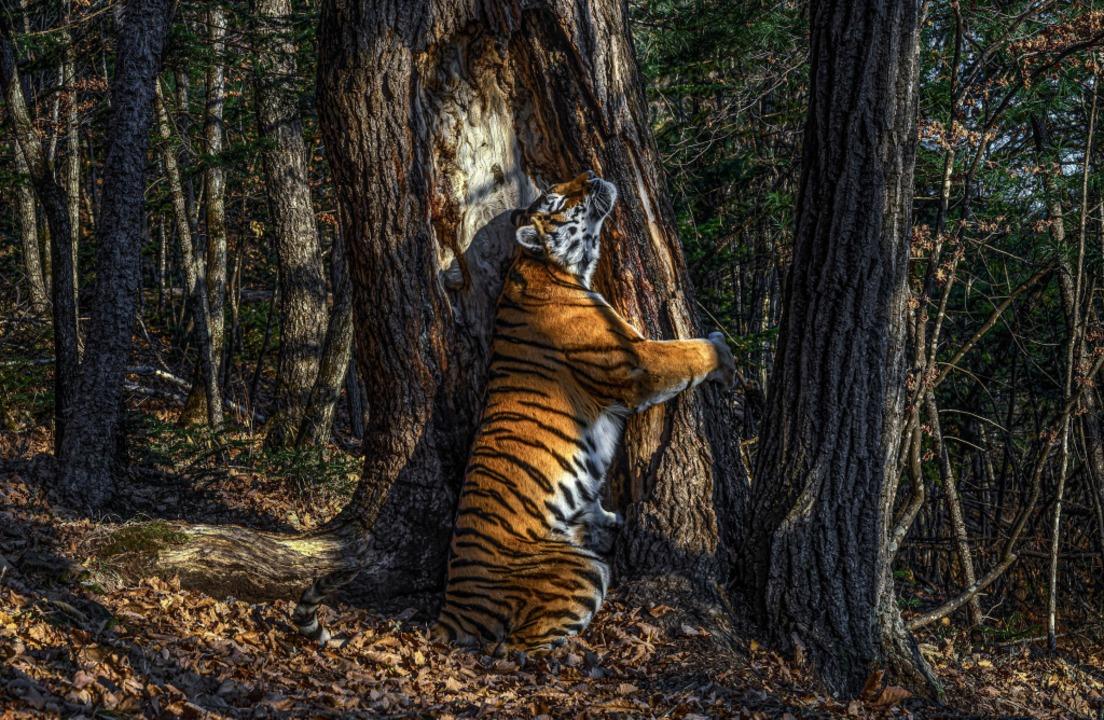 | Foto: Sergej Gorschkow (dpa)