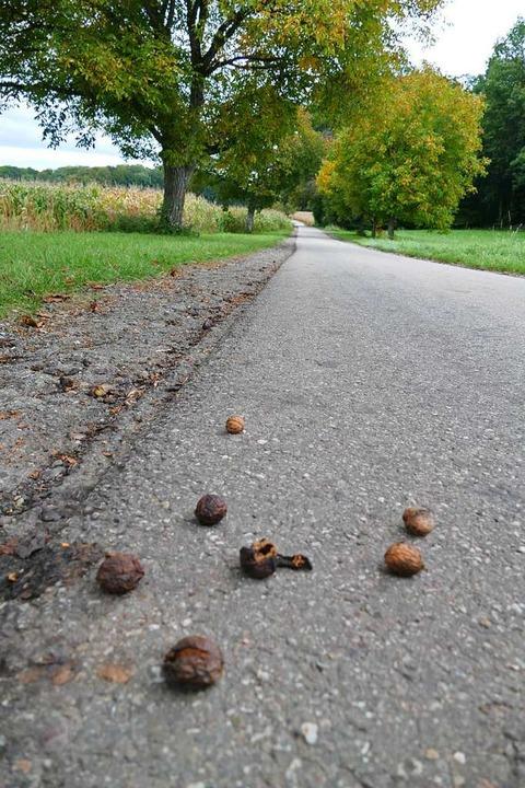 Darf man Nüsse (wie hier bei Mappach) ...ich gehört die Ernte dem Baumbesitzer.  | Foto: Victoria Langelott