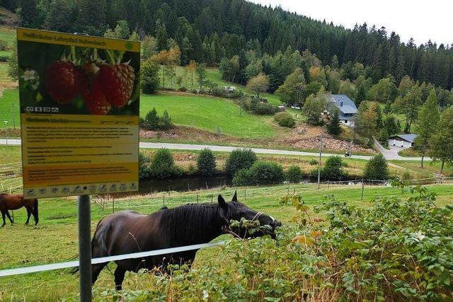 Der Heilkräuterlehrpfad in Bubenbach verläuft über Wald- und Wiesenwege