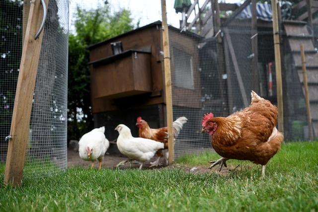Feuerwehr befreit sechs Hühner aus brennender Gartenhütte in Freiburg-Opfingen