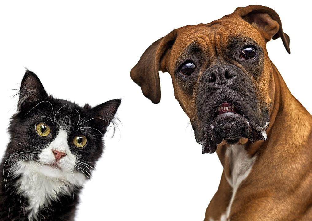 Was wollen uns die beiden wohl sagen? Hört – und seht –  genau hin!  | Foto: Happy monkey - stock.adobe.com