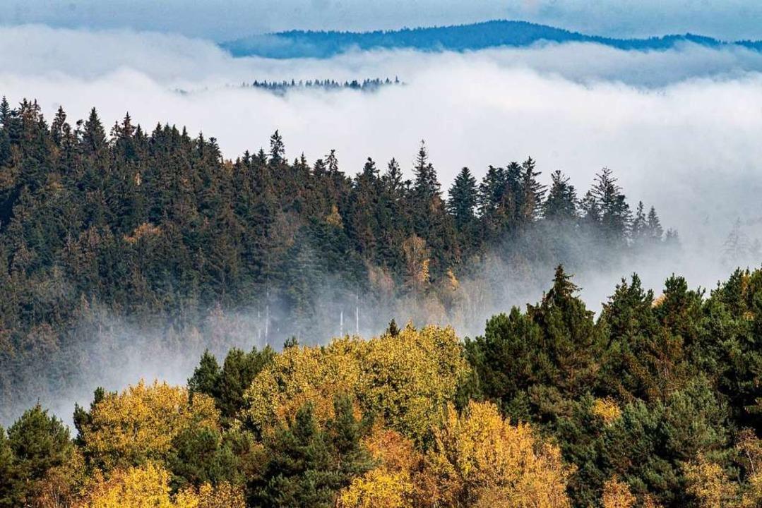Baumwipfel eines Waldes  | Foto: Armin Weigel (dpa)