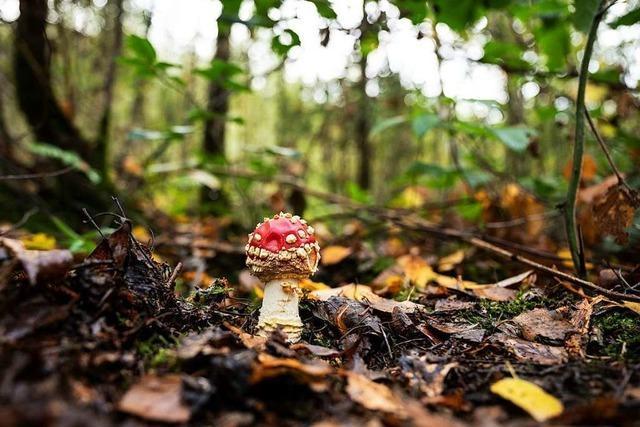 Denzlingen räumt ökologischer Funktion des Waldes Priorität ein