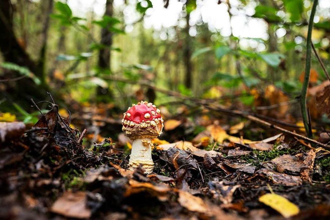 Nicht alles, was im Wald wächst, schme... ist, umso besser für Natur und Klima.  | Foto: Bernd Thissen (dpa)