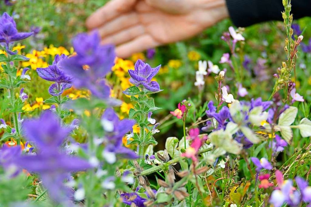 Nicht alle Gräser-, Kräuter und Wildbl...t – nützlich sind sie aber alle.  | Foto: Sophia Hesser
