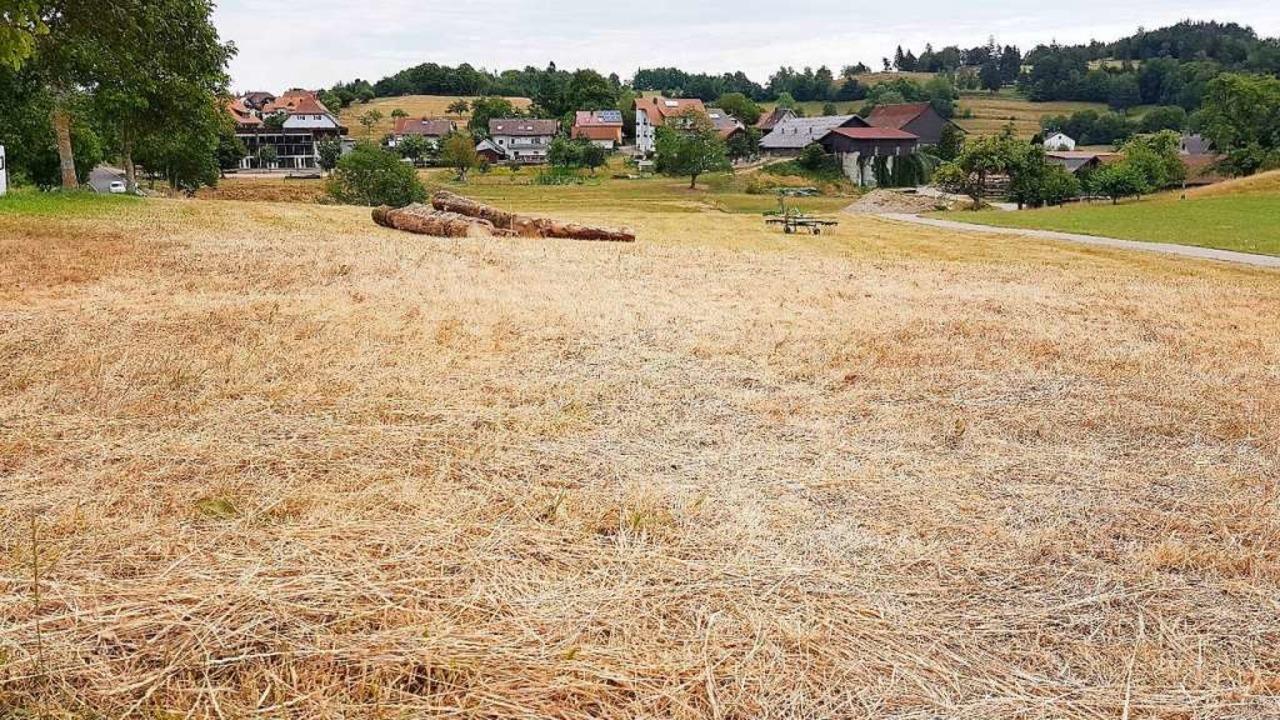 Völlig ausgedörrte Weide im Juli 2020 ...eitet den Landwirten zunehmend Sorgen.  | Foto: Gerald Nill