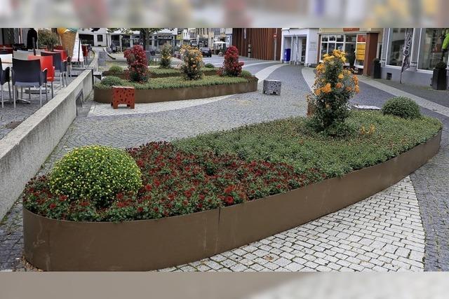 Chrysanthemenzeit in der Stadt