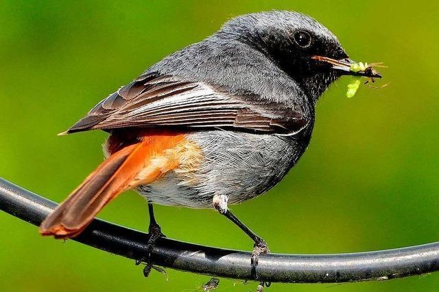 Vogelexperte gibt Tipps für die Winterfütterung von Tieren