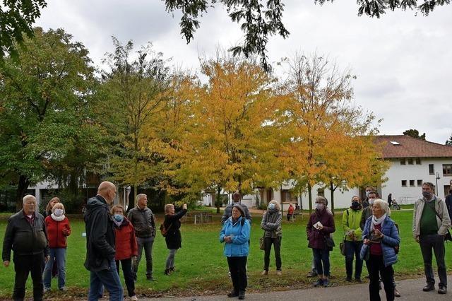 Gemeinde stellt Bäume unter Schutz