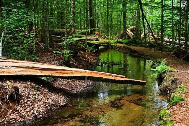 Wie der Bayerische Wald zum Vorreiter der Umweltschutzbewegung wurde
