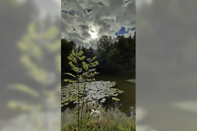 Seerosen unter Herbstwolken