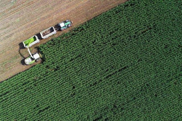 Die Reform der EU-Agrarförderung bleibt Stückwerk