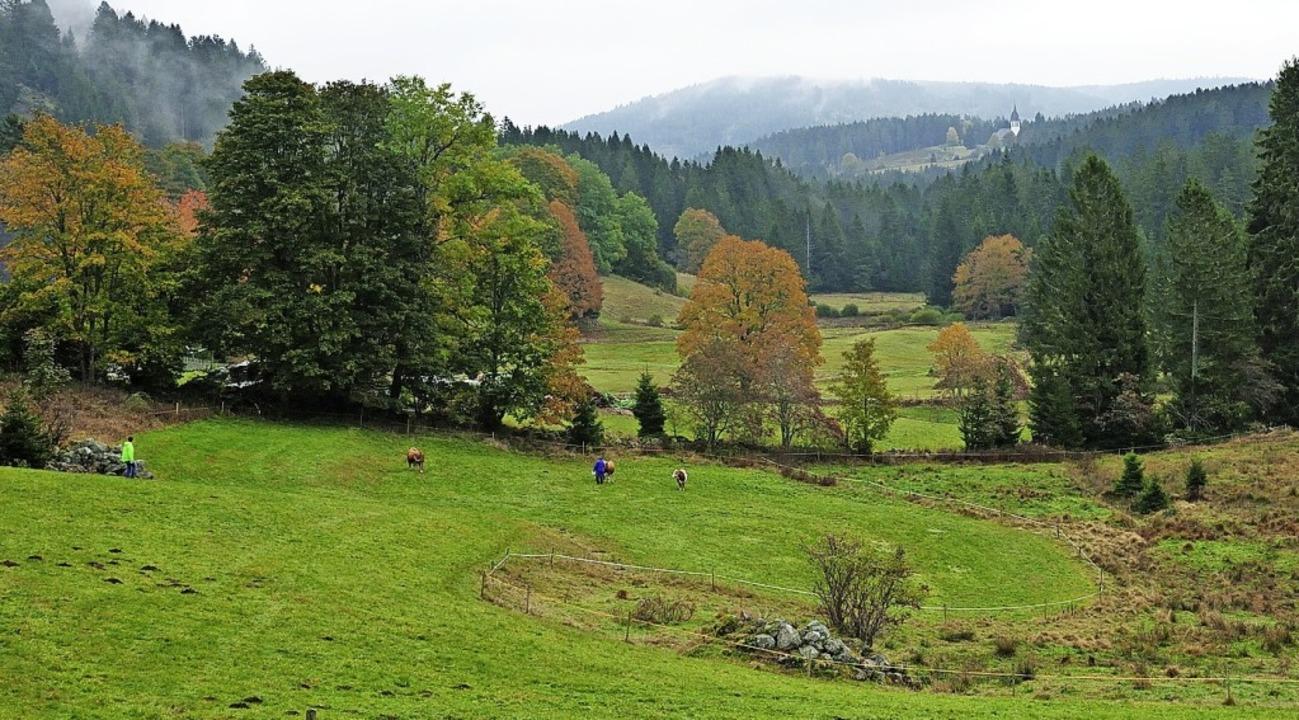 Viel Freiheit genossen die Hinterwälder auf den großen Weiden.  | Foto: Martin Schwenninger