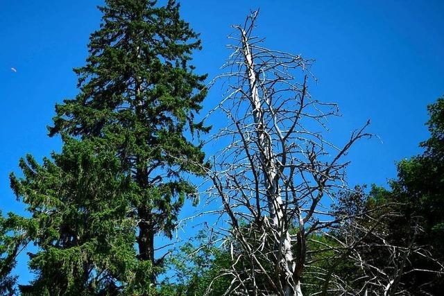 46 Prozent der Bäume im Südwesten weisen deutliche Schäden auf