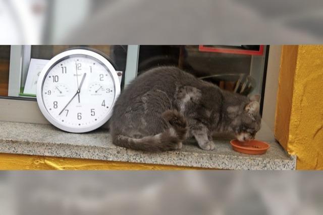 Achtung, heute Nacht Zeitumstellung – alles für die Katz'?