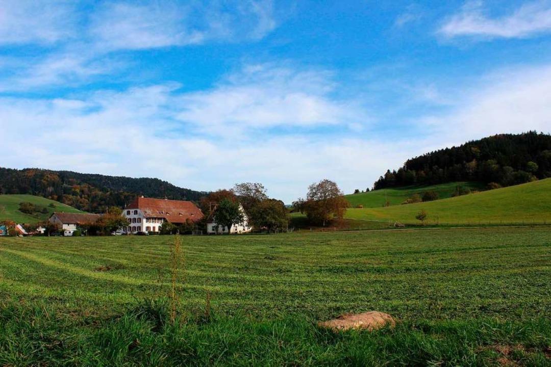Der südliche Teil des künftigen Neubaugebietes Nadelhof  | Foto: Erich Krieger