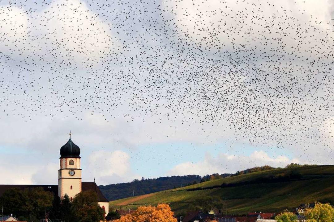Stare über Kirchhofen.  | Foto: Monika Danner