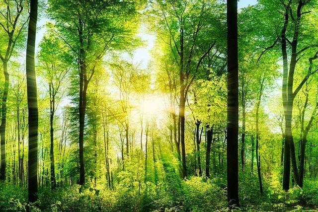 Gundelfingen will mit Wald ein kleines Plus erwirtschaften