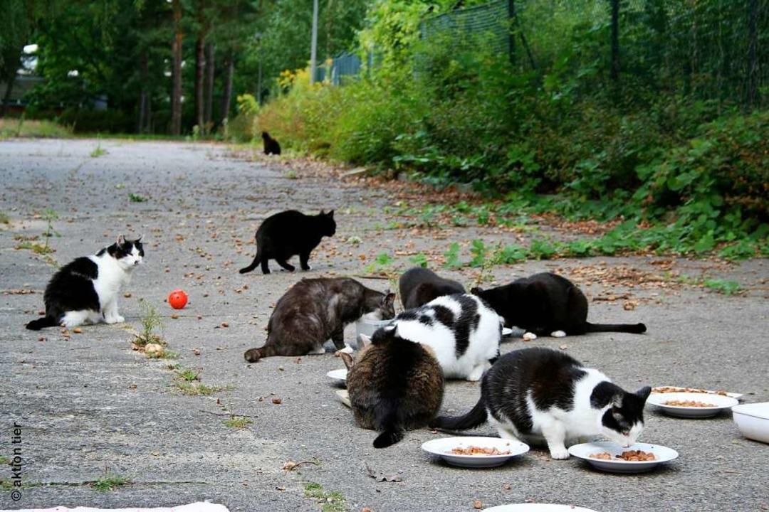 Streunende Katzen sollen durch eine Verordnung besser geschützt werden.  | Foto: Privat