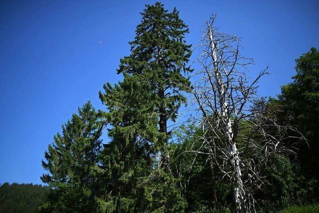 Wie geht es weiter mit dem Sulzburger Wald?