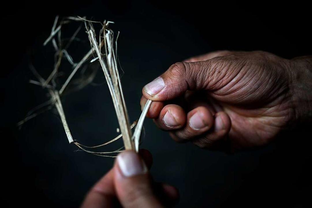 In den Stängeln liegen die Fasern, die herausgebrochen werden müssen.   | Foto: PHILIPPE LOPEZ