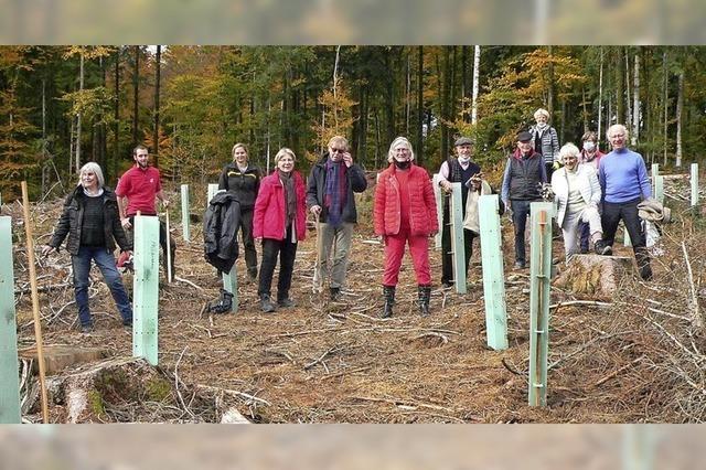 Aktion zur Rettung des Waldes