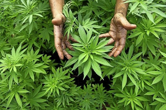 Cannabis in der Wohnung