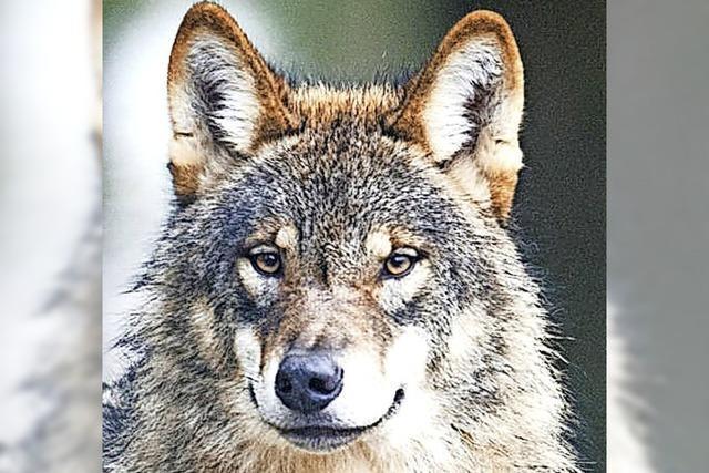 Über den Wolf reden und informieren