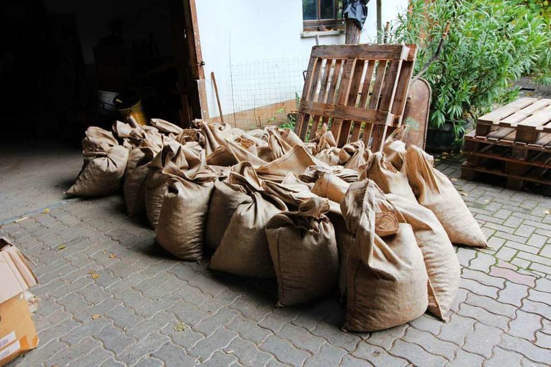 Abgefüllt in Säcke warten die Eicheln auf ihren Abtransport.  | Foto: Reinhard Cremer