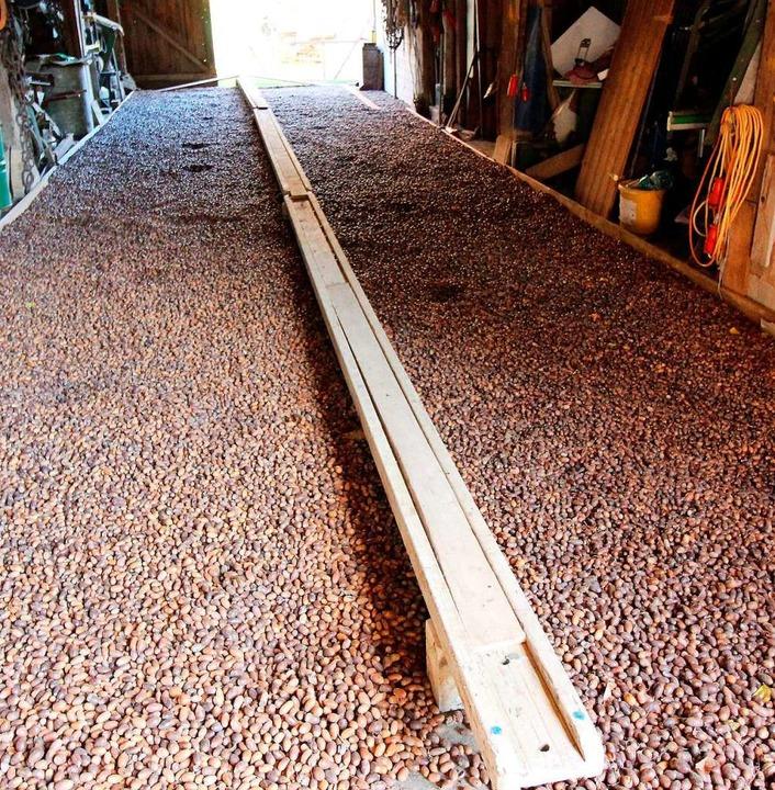 In einer gut belüfteten Scheune werden die Eicheln zunächst gelagert.  | Foto: Reinhard Cremer
