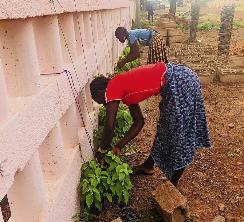 Bewohnerinnen des Foyer des jeunes fil...n Movement gepflanzten Bougainvilleen.  | Foto: Georges Bazié