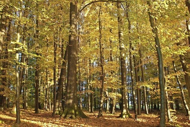 Der Wald ist schön – aber teuer