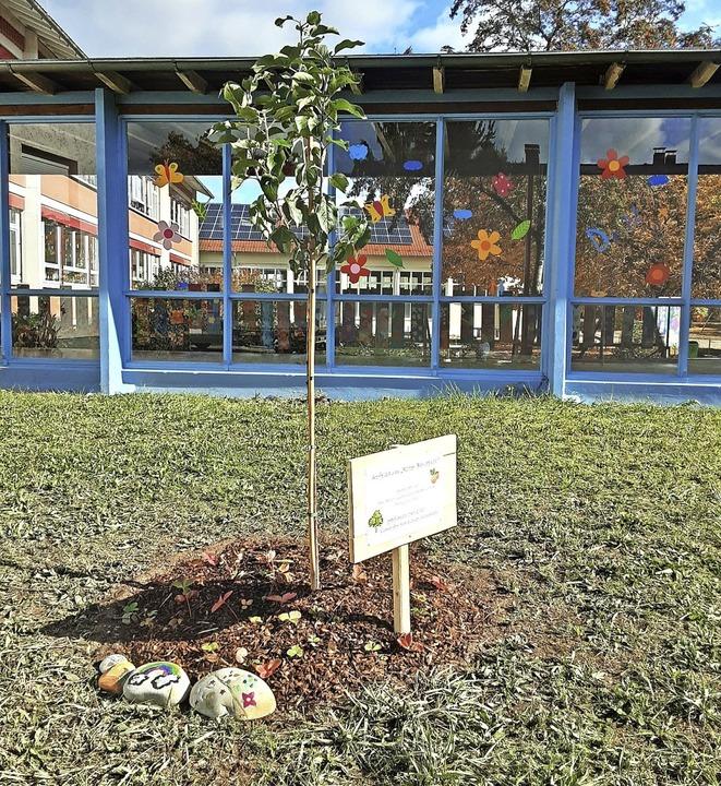 Sichtbares Zeichen für den Klimaschutz...Apfelbaum vor der Max-Metzger-Schule.   | Foto: Sandra Klinke