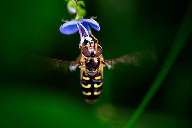 Vogelkundler warnen: Insektensterben noch massiver als gedacht
