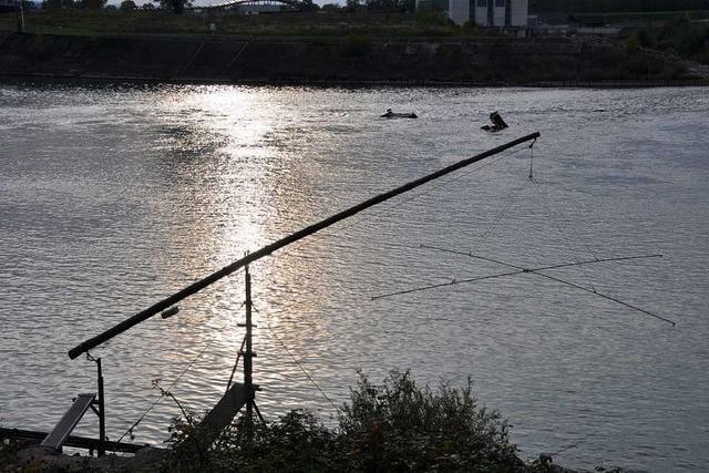 Angelvereine setzen sich dafür ein, dass die Fische in den Rhein zurückkehren