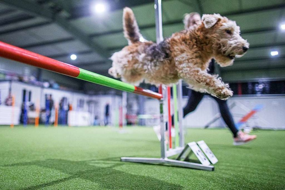Hundesport ist ein gutes Beispiel: Wet... Luft ist aber weiterhin kein Problem.    Foto: Jens Büttner