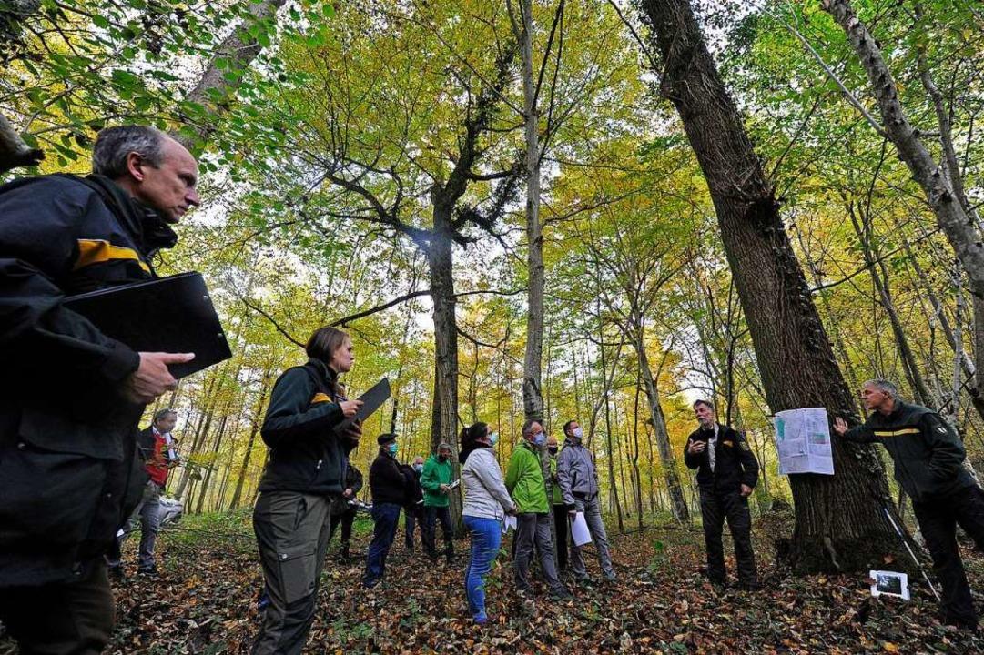 Unterwegs im Neurieder Wald mit Revier...ür Waldwirtschaft in Offenburg (links)    Foto: Bettina Schaller