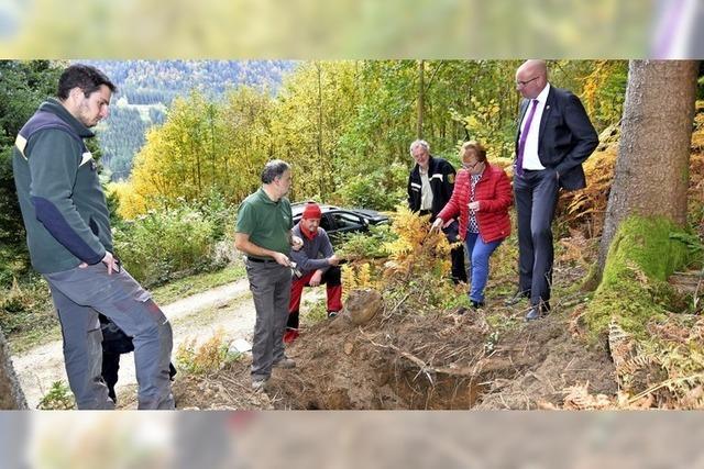 Anleitung zum Waldbau der Zukunft