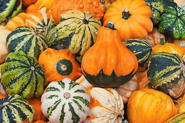 Großteil der Freiburger Äcker wird ohne Pestizide bewirtschaftet