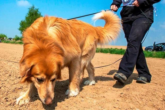 In Dossenbach sorgen Hunde und Pferde für Ärger