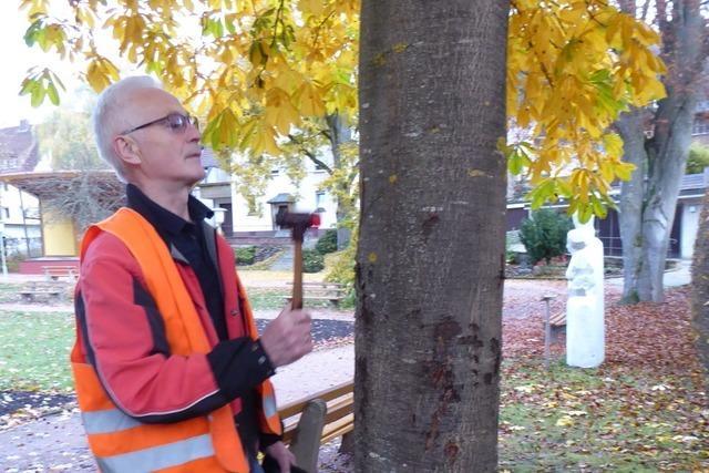 So arbeitet ein städtischer Baumkontrolleur