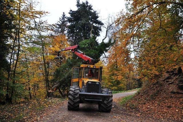 Im Schopfheimer Entegastwald heulen wieder die Sägen