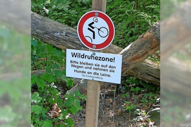 Förster rät zu ausgewiesenen Mountainbike-Strecken