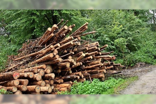 Schwere Zeiten für den Forst
