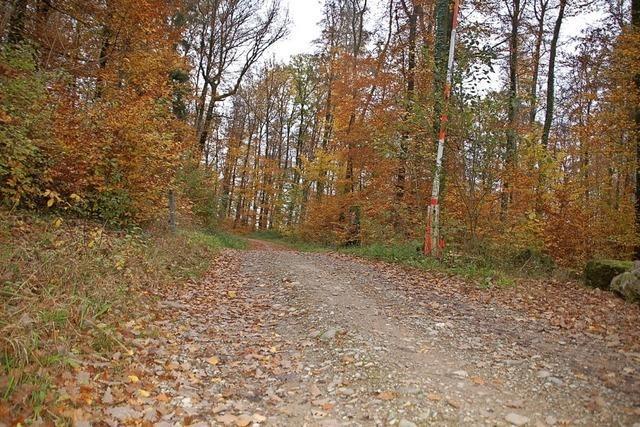 Radweg durch Privatwald mit Problemen