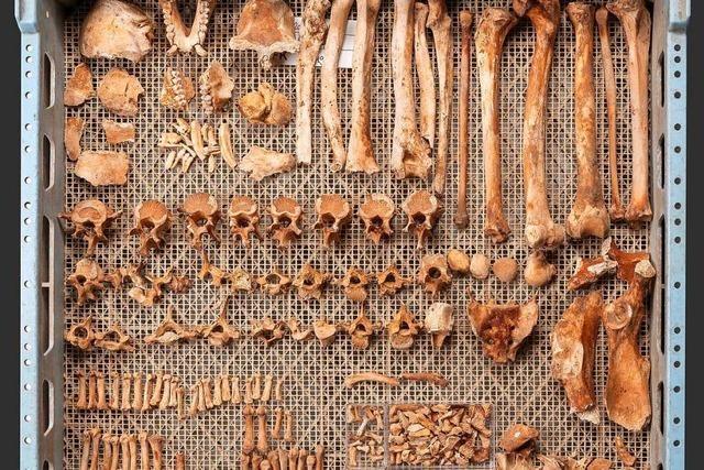 Archäologen entdecken ein mittelalterliches Affenskelett auf einer Baustelle