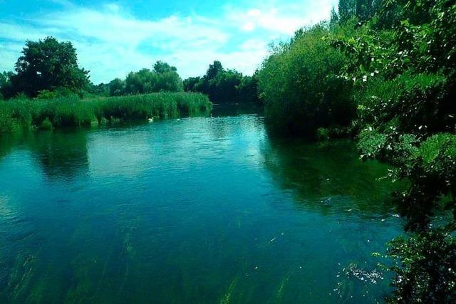 Die Rheinauen im Ried bieten Lebensräume für Fische, Vögel oder Wiesen
