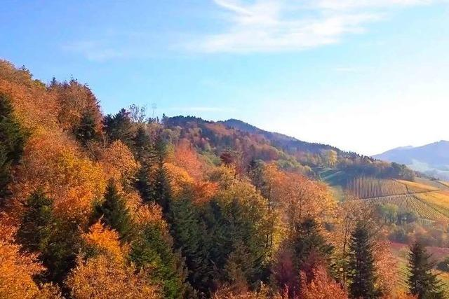 Video: Ein Drohnenflug über den herbstlichen Breisgau