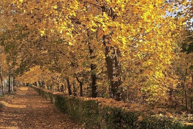 Goldener Herbst in Lörrach
