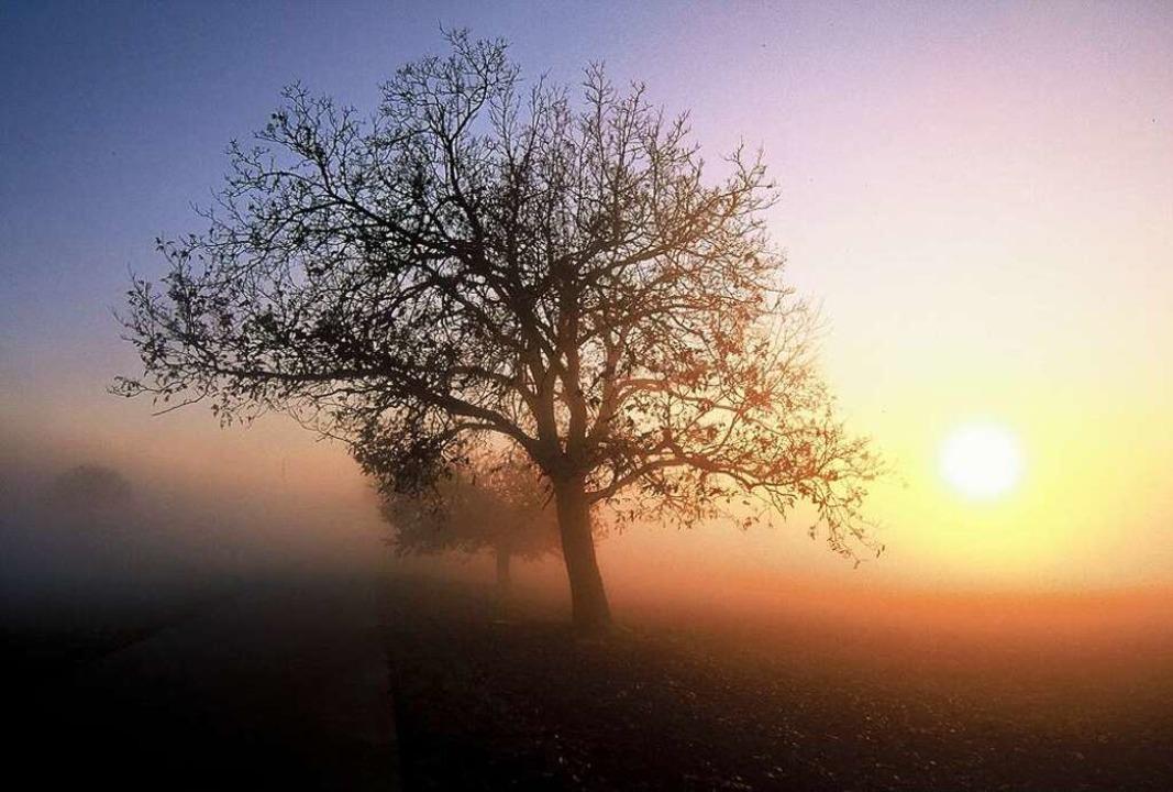 Novemberstimmung  | Foto: Ingo Seehafer